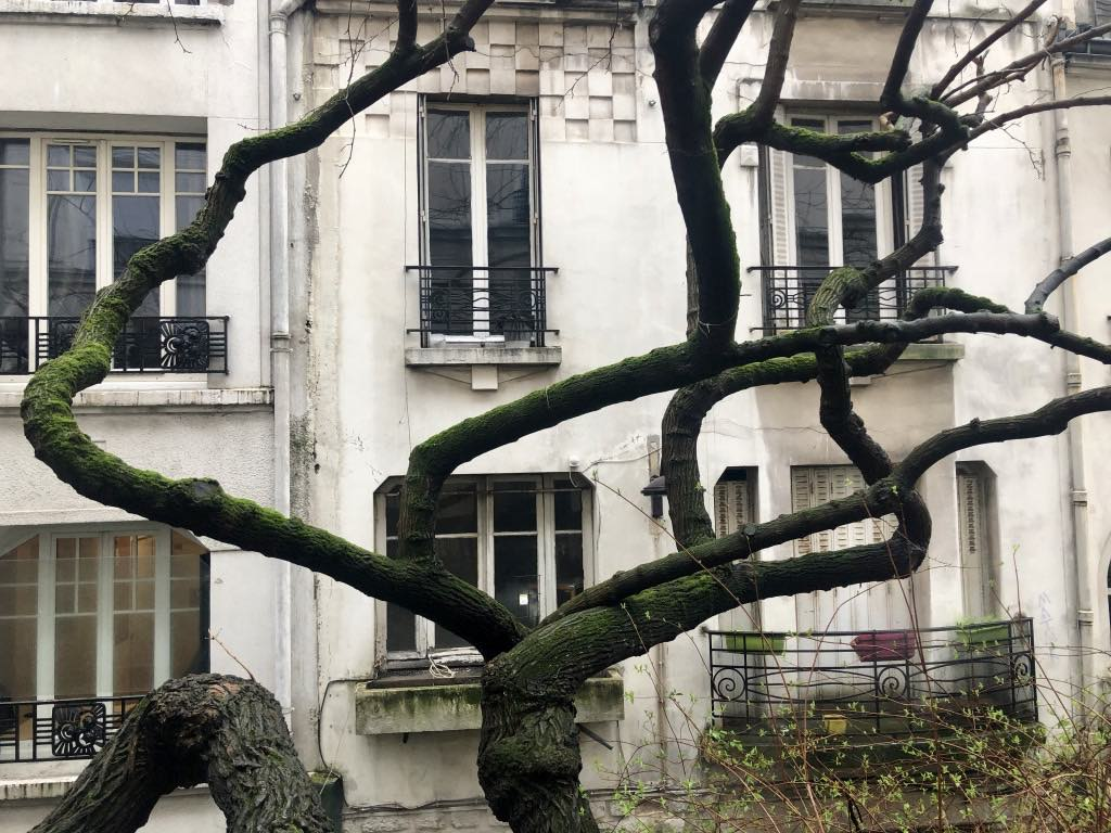Apartments and a tree in Montmartre. © Paris Update