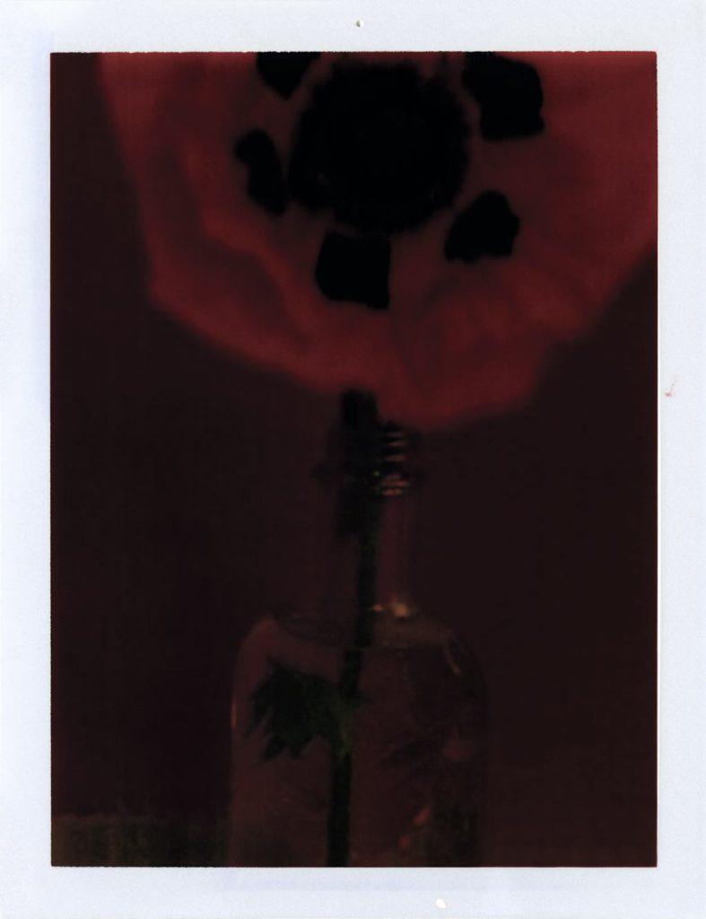 """""""Le Pavot"""" (1997). © Sarah Moon"""
